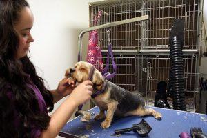 http://newsite.animalparadisehospital.com/wp-content/uploads/2011/05/HOME-300x200.jpg